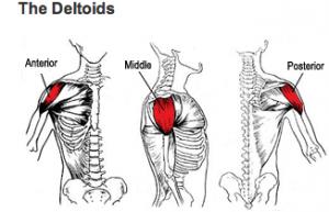 The best shoulder workout - Specforce