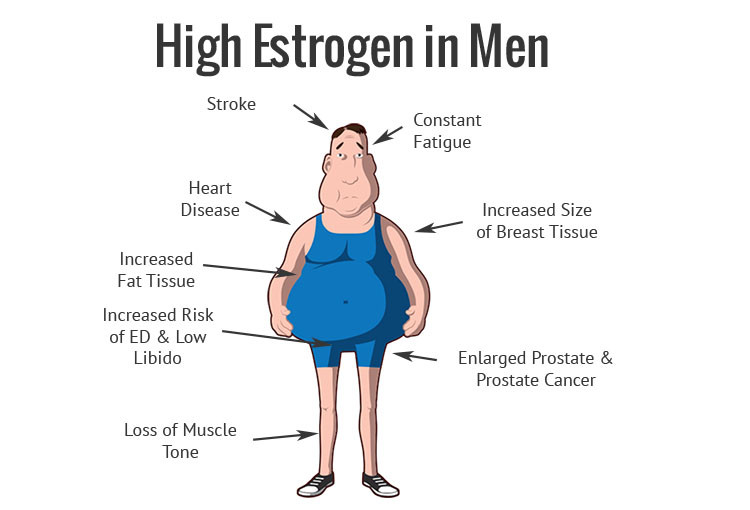 Understanding Estrogen In Men - Alpha Nation