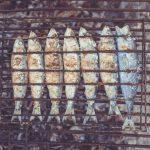 10 nutrient dense foods alpha nation sardines