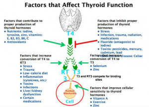 factors affecting thyroid